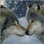 """Набор для вышивания """"Волки"""""""
