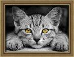 """Алмазная мозаика """"Желтоглазый котёнок"""""""