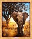 """Алмазная мозаика """"Африканский слон"""""""