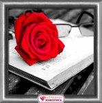 "Алмазная мозаика ""Роза и книга"""